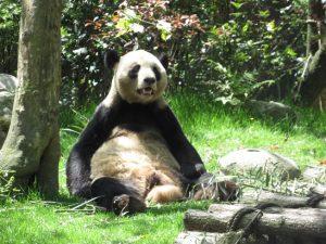熊猫谷の永くん
