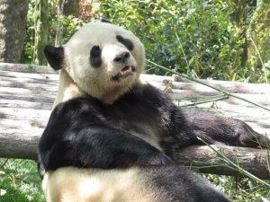 熊猫谷永くんその2