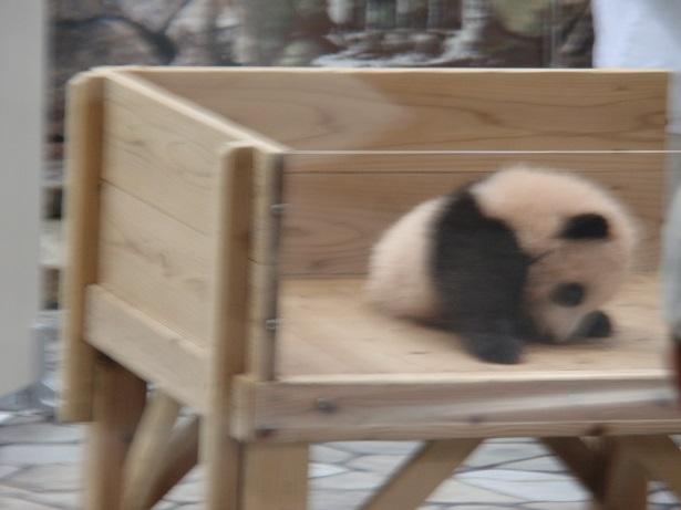 それどこの? パンダ観覧で気になる人気のパンダファッション・アクセサリー