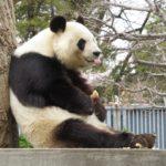 パンダ好きにおすすめのふるさと納税 2019年末情報メモ