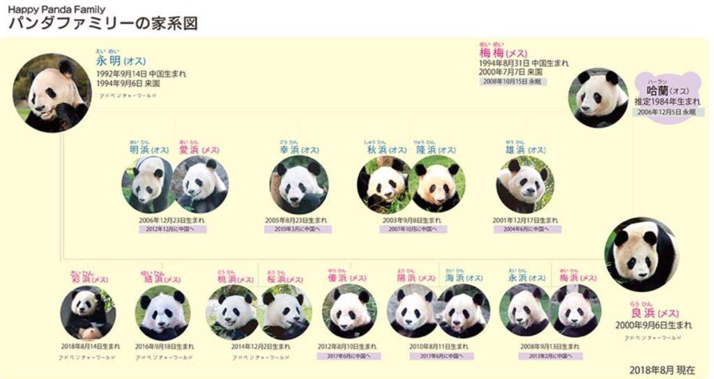 アドベンチャーワールドパンダ家系図