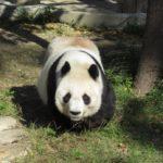 パンダ好きのためのふるさと納税 2020年版メモ